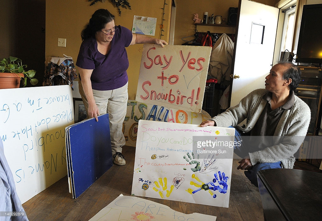 Craig and Lisa Balunsat look at signs made by their grandchildren about keeping their goat, Snowbird, at their home in Chesapeake City, Maryland, on February 14, 2012. The Balunsats are battline the county which says a zoning rule means she can't have the goat as a pet.
